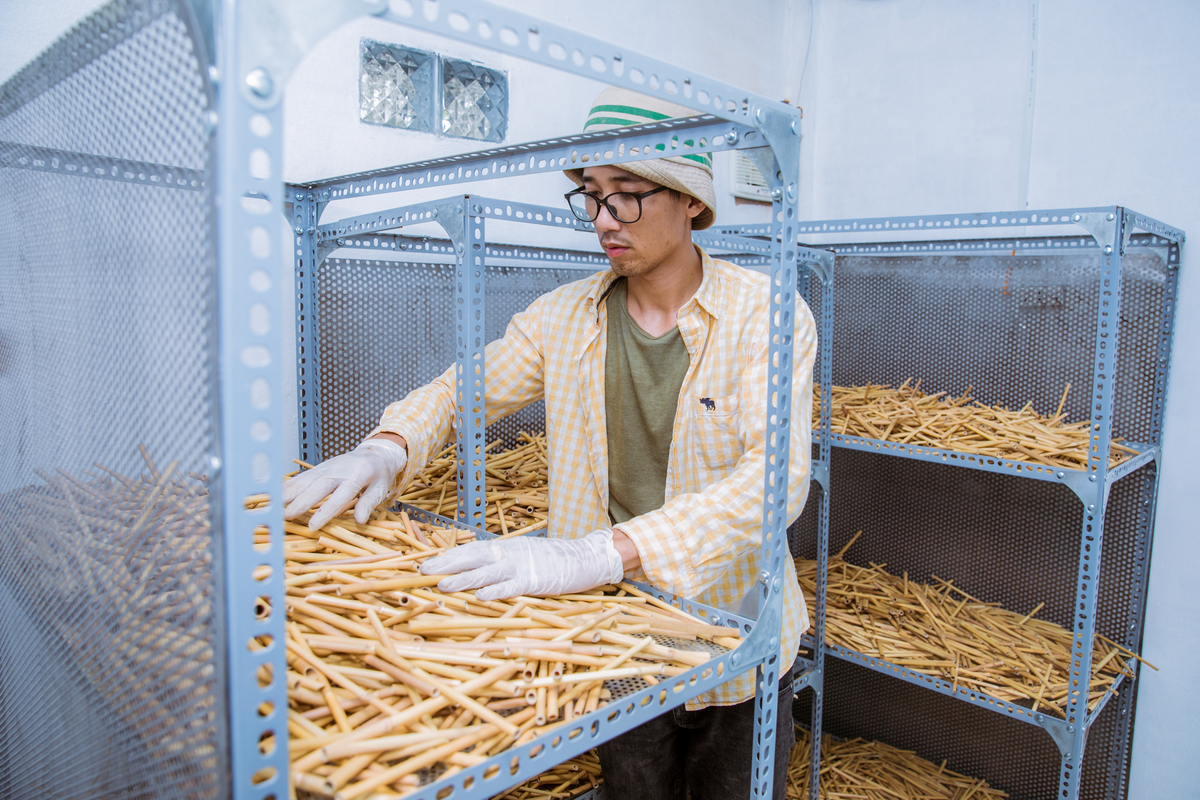 making reed straws