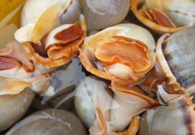 soaking garlic snails