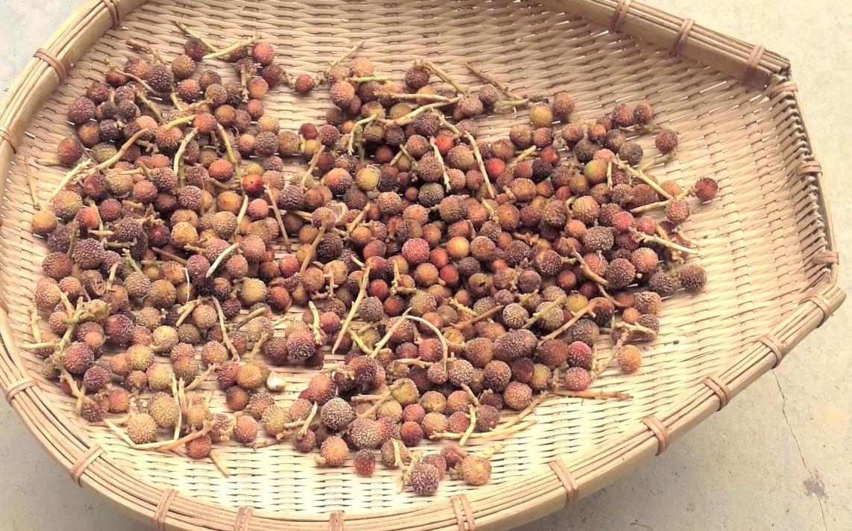 spiny cardamoms in Vietnam