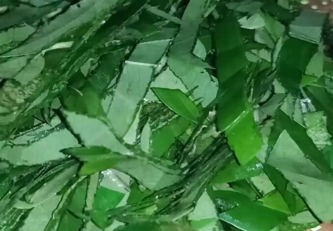 suong sam leaves