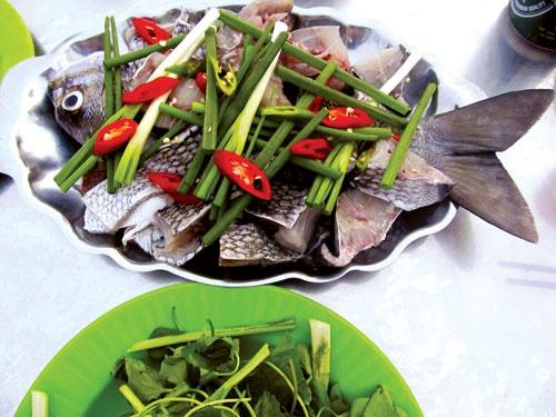 Brassy chub (Kyphosus vaigiensis)