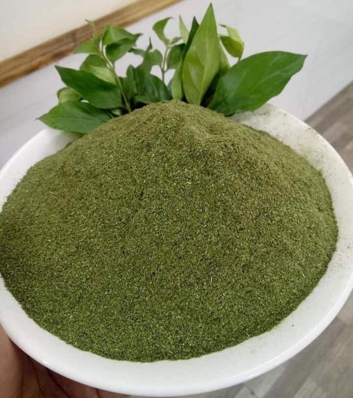 Catunaregam tomentosa leaf powder
