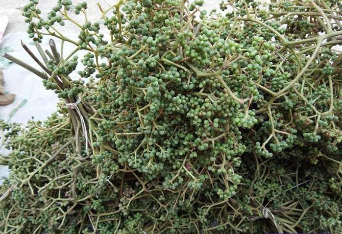 Green Zanthoxylum rhetsa seeds - mac khen