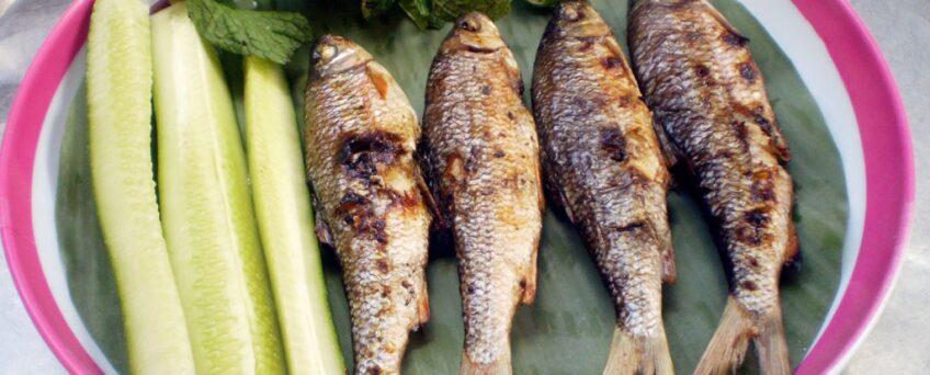 Grilled Onychostoma fish