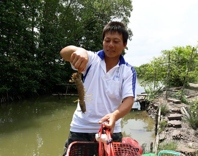 Mantis shrimp aquaculture in Ca Mau province