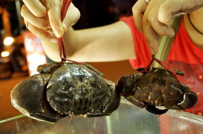 Black stone crab Myomenippe hardwickii