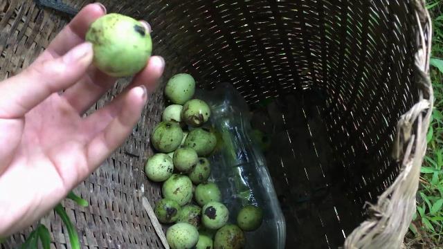 green mac trai mango