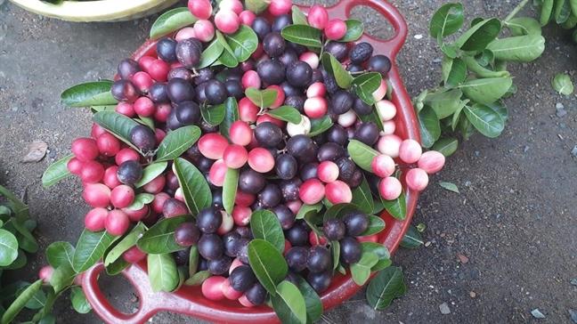 harvested carandas plums