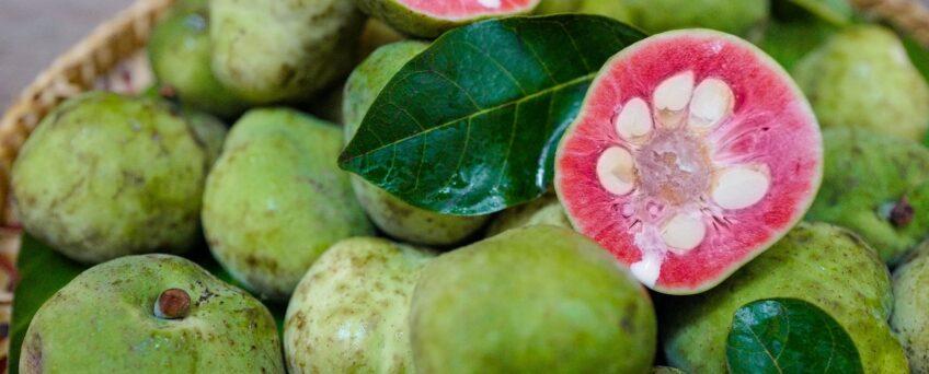 Artocarpus tonkinensis fruits