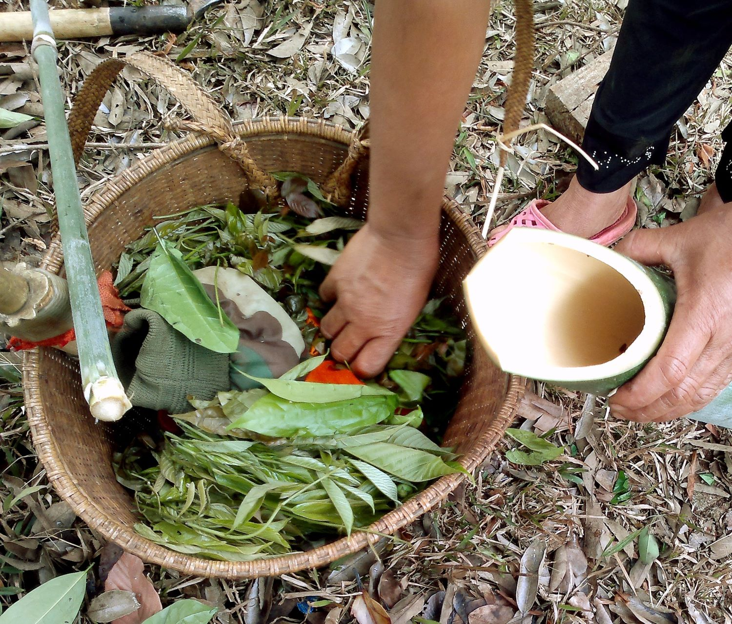 Cooking gnetum leaf soup in bamboo