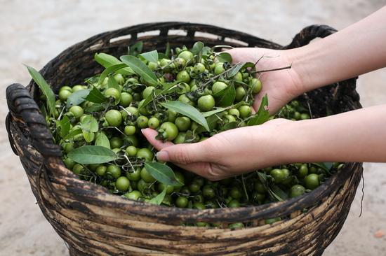 Diospyros mollis fruits