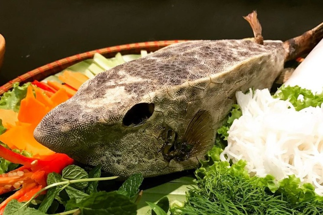 Ostracion rhinorhynchos - the horn-nosed boxfish