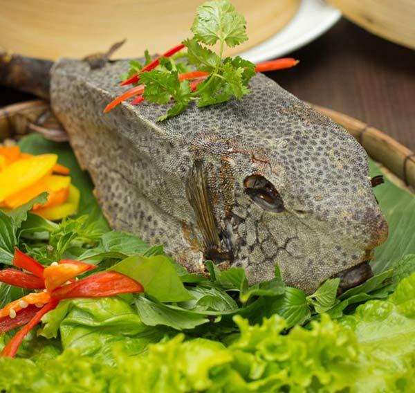 Steamed horn-nosed boxfish - Ostracion rhinorhynchos