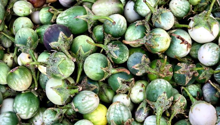 bitter eggplants