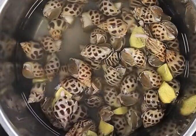 parboiling babylon snails