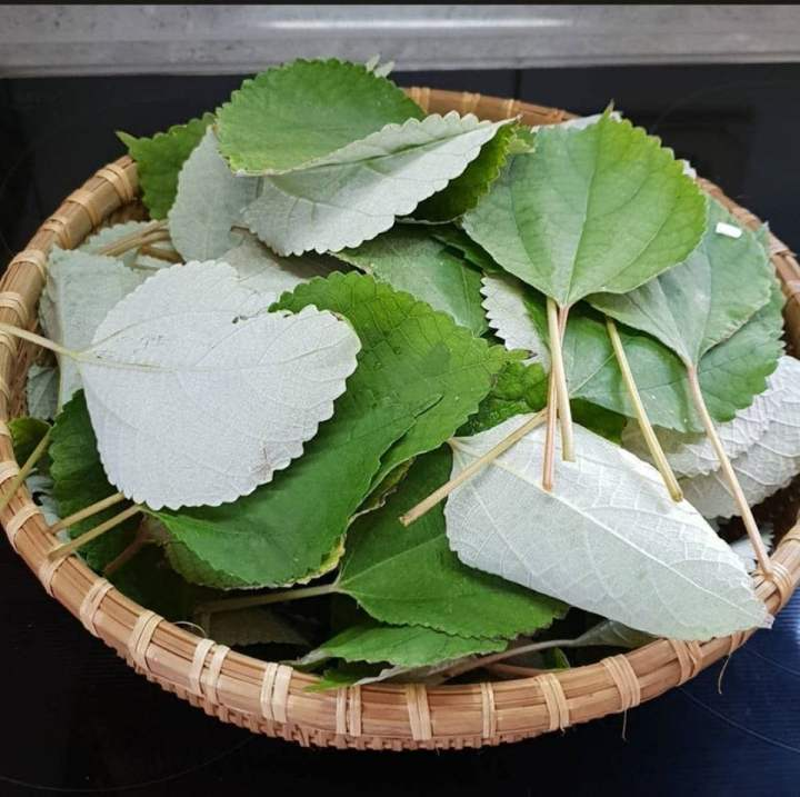 Boehmeria nivea - ramie leaves
