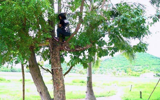 Azadirachta indica - the neem tree