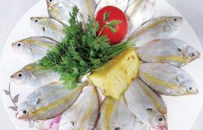 Karalla daura - The goldstripe ponyfish