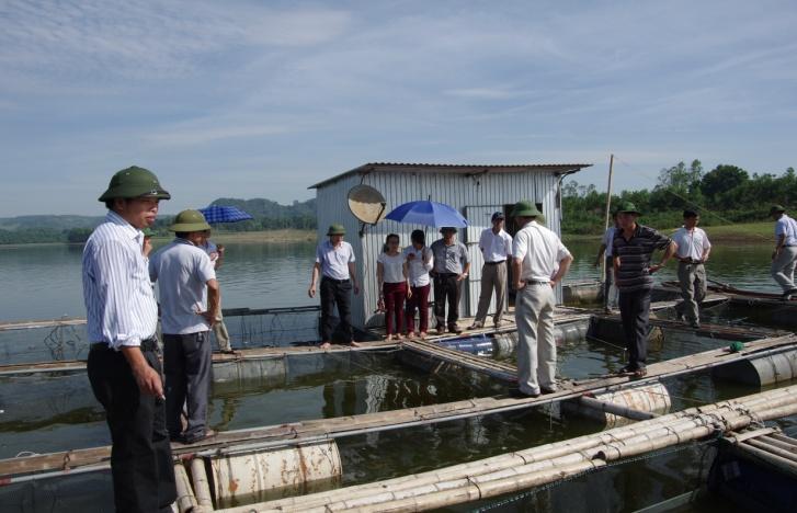 Wallago catfish farming in Nghe An